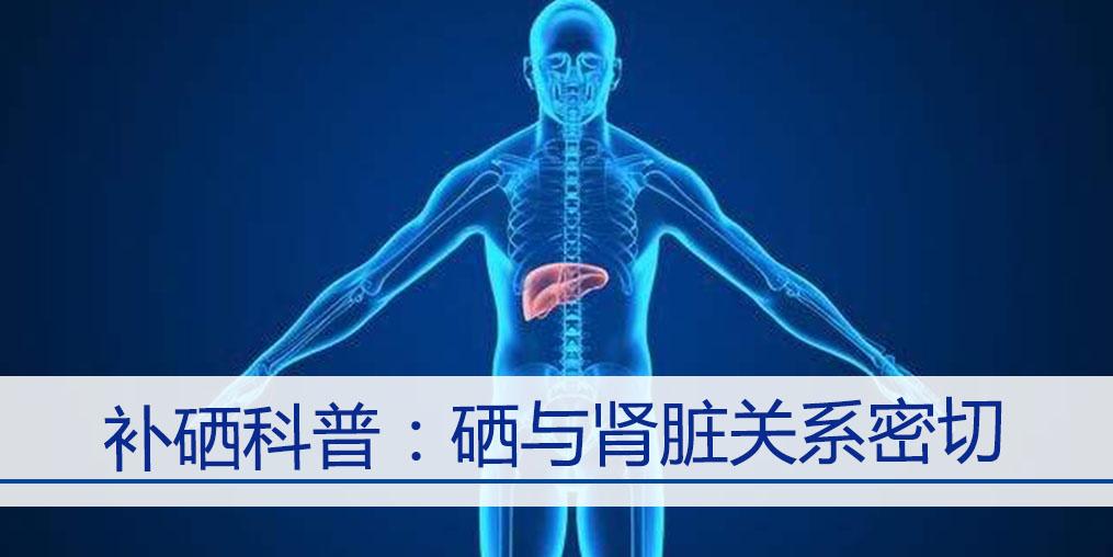 补硒科普:硒元素与肾脏关系密切