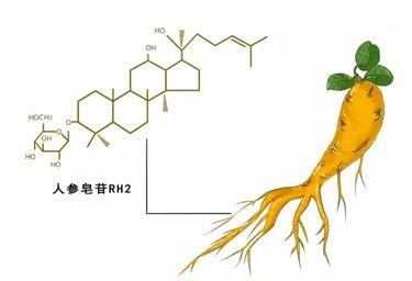 科普:人参皂苷Rh2的效果是看含量还是浓度?