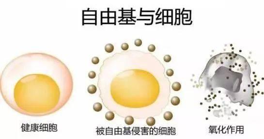 硒语   美国华裔专家揭晓新病毒与自由基的关系!