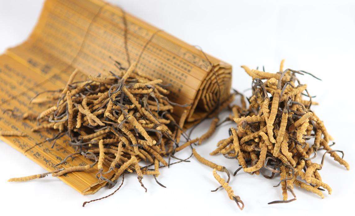 解析冬虫夏草中的虫草素有何作用