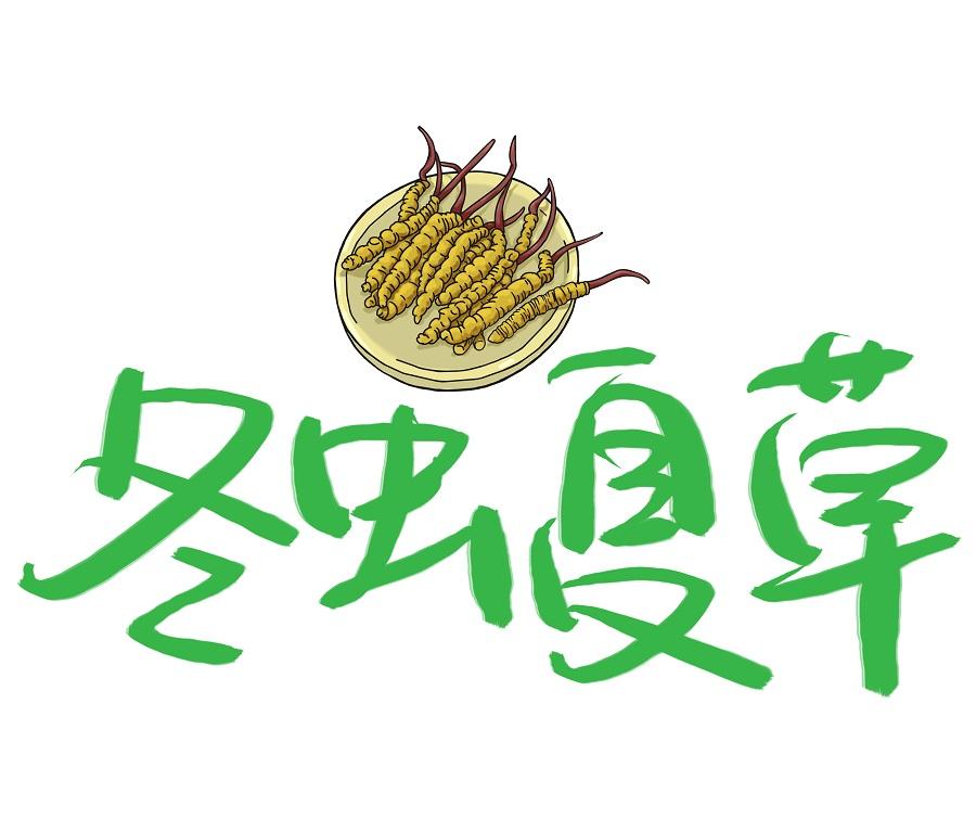 为什么中药冬虫夏草需要长期服用