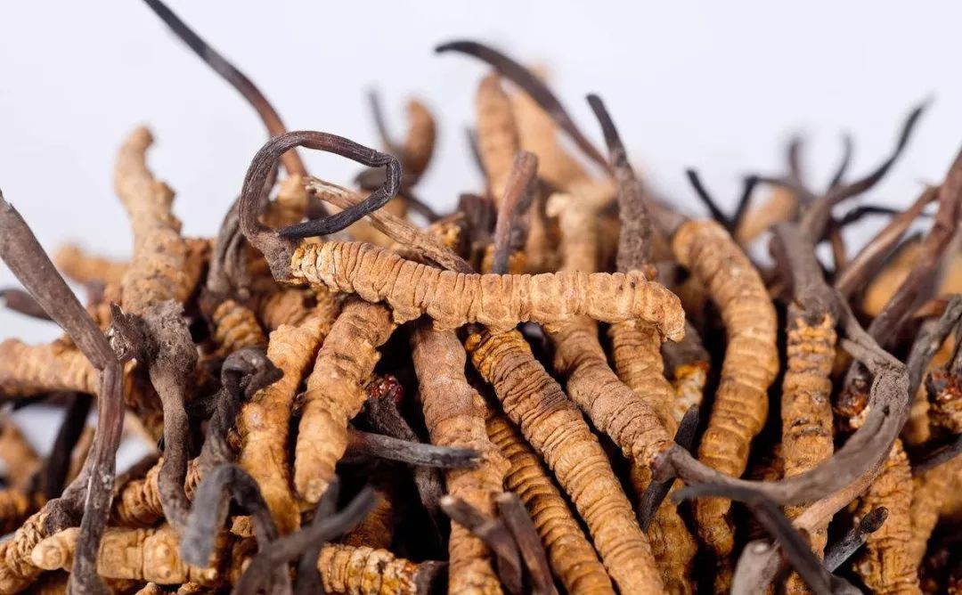 冬虫夏草中营养元素与肝之间的关系