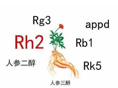 中药人参皂苷的辅助作用,Rh2和Rg3都不错
